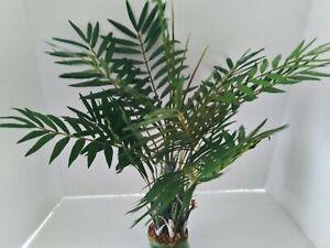 Artificial Mountain Palm Plant W/O POT Silk Flowers
