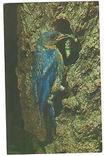BLUEBIRD & WORM Blue Info Nesting Boxes STATE BIRD Missouri & New York Postcard
