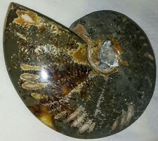 "BIG JADE AMMONITE! 4.25"" AUTHENTIC JURASSIC ERA FOSSIL! 216g. USA SELLER"