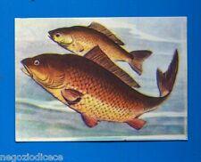 ANIMALI - Lampo 1964 - Figurina-Sticker n. 297 - CARPA -New
