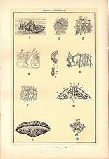 """1902 Antique Print Picture Sponge Structure  No Descriptions!! Dodd Mead  10X6"""""""