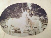 Photographie Ancienne (1860?) D'un Homme Présentant Un Cheval.