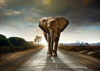 Beautiful Majestic Elephant Poster Size A4 / A3 Wild Animals Poster Gift #8240