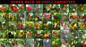 SUPER PACK 50 variedades de chiles ,50 X 10,500 semillas,seeds