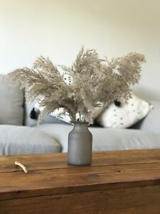 pampas grass family,large tall 5 reed grass 50cm with brown/grey dry flower reed