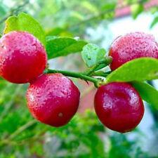 DI- 20Pcs Red Lemon Seeds Dwarf Tree Bonsai Fruit Home Garden Outdoors Plant A