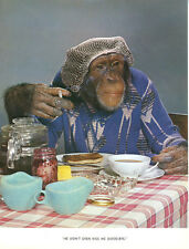 1 Vintage Art Photo Page Chimp Chat Book 1960's Smoking Monkey Coffee Jam