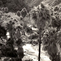 Vintage RPPC 1920s Palm Canyon Shields Date Gardens Postcard Palm Springs Indio