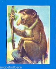 ANIMALI - Lampo 1964 - Figurina-Sticker n. 41 - NASICA DEL BORNEO -New