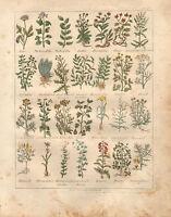 1810 Stampa Culpepers Erbe N°04 Botanico Mano Colorato Medicina Erbe