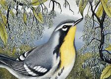 Bird warbler fringe tree ACEO ART After the Rain by Karen Romine KR Limted Ed