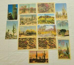 Vintage Postcard Lot Desert