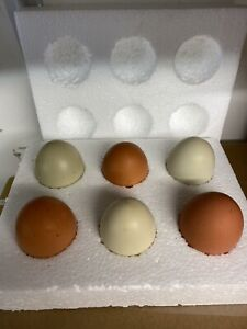 6 fertile chicken eggs for hatching