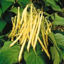 Yellow Wax Bean Seeds USA Garden Vegetable Golden String Green Beans Seed 2020