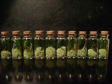 10 TINY TERRARIUM JARS dried plants moss MINIATURE DISPLAY BOTTLES taxidermy lot