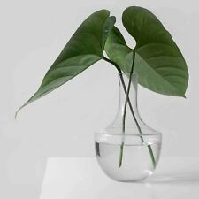 deko blumen k nstliche pflanzen g nstig kaufen ebay