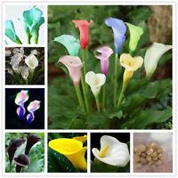 2X Rare Colorful Calla Lily Bulbs-Perennial Gardening Summer Flower Bulb Roots