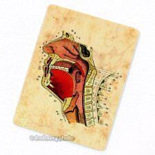 Internal Structures of Human Head #4 Deco Magnet, Fridge Antique Anatomy Medical