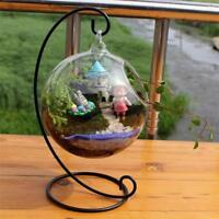 Clear Glass Ball Vase With Air Plant Holder With Metal Base Table Top Decoration