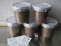 Magic farm's shiitake mushroom wood supplemented (PF tek jars) grow pot kit