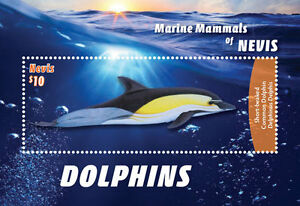 Nevis-2016-MARINE MAMMALS Dolphins