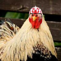 Casco de pollo Casco pequeño para mascotas Sombrero para pájaros Sombrero