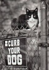 "Postkarte, Tierbildkarte, Katze ""Curb your Dog"""