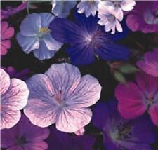 Flower - Geranium Hardy Mix - 10 Seeds