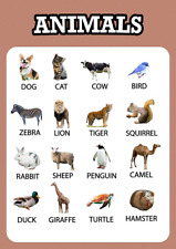 Animals Educational Pre-school Wall Poster for Kids Learning A4/A3