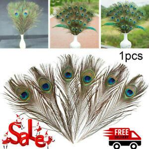 1/20/50 Pcs Peacock Tail Feathers  25-30cm For Wedding Craft Arts Home Decor