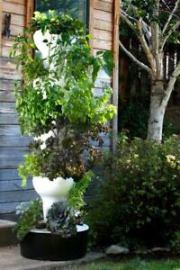 Foody 8 Hydroponic Tower - Grow up to 40 Plants