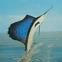 Vintage Postcard Jumping Sailfish Ocean Water