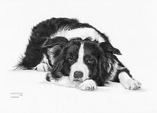 Border Collie (6) dog Limited Edition art drawing print signed by UK artist