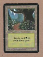 MTG - Forest (B) Alpha Edition - Very Heavily Played/Poor - Single Land Card