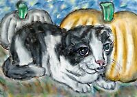 ACEO SCOTTISH FOLD Autumn Pumpkins Cat Art Original Miniature Painting ATC KSAMS