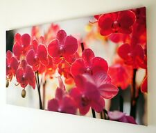 LARGE RED PINK ORCHID FLOWER CANVAS WALL ART PICTURE LARGE 18 X 32 INCH