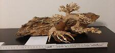 Drachenstein  Bonsai Baum Aquariun Terrarium Dekoration Garnelen