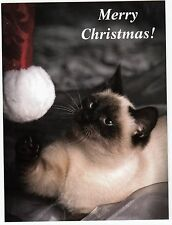 Postcard Siamese Cat Curious About Christmas Santa Hat