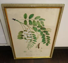 Litografía, koloriert, frángula, robinia pseudo-Acacia, arkenh.,