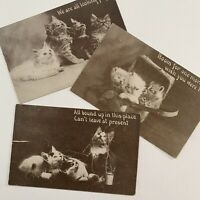 Antique Cat Postcard Lot 3 Sweet Cute Kittens Playing Thread In Basket 1912