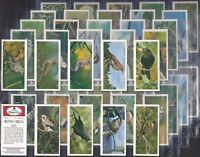 CARRERAS BLACK CAT-FULL SET- BRITISH BIRDS (50 CARDS) - MINT!!!