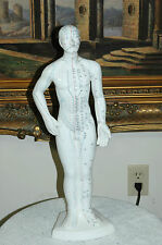 """Porcelain Acupuncture Point Mannequin Anatomical Model Male Learning Tool, 21"""" H"""