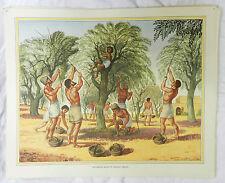 Poster Vintage escuelas-recolección de aceitunas en la Antigua Grecia-C 1920s/1930s