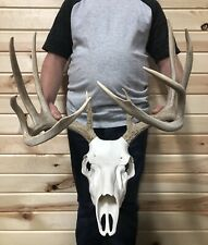 Perfect 5x5 Typical Whitetail Antler Horn Deer Skull Mount Taxidermy Rack Decor