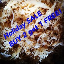 SEA MOSS 100% NATURAL (WILD) DR SEBI IRISH MOSS HOLIDAY SALE Buy 2 Get 1 FREE