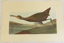 The Birds of America. Audubon. Scolopaceus Courlan. Amsterdam Edition.