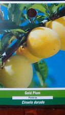 GOLD PLUM Fruit Tree Best New Healthy Trees Natural Plums Plant Home Garden