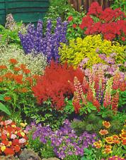 Buntes Stauden Paket Sommergarten mit 12 Pflanzen
