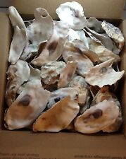 Oyster Shells Broken For Garden Driveways Clean 10 Lbs