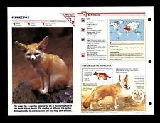 Fennec Fox Wildlife Fact File Mammal Animal Card Home School Study 1.221